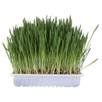 Trixie Catnip Cat Grass