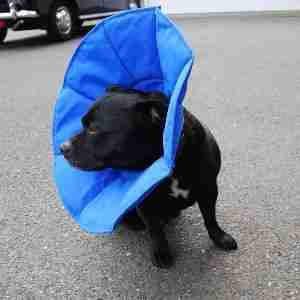 Softe Elizabethan Pet Collar