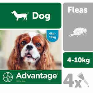 Advantage 100 for Dogs 4-10kg - 4 pipettes