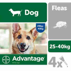 Advantage 400 for Dogs 25kg plus - 4 pipettes