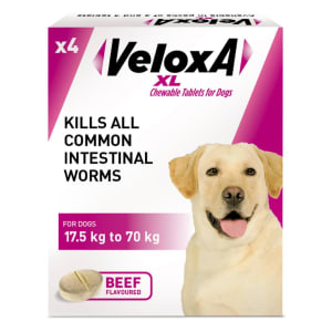 Veloxa XL Chewable Tablets for Dog
